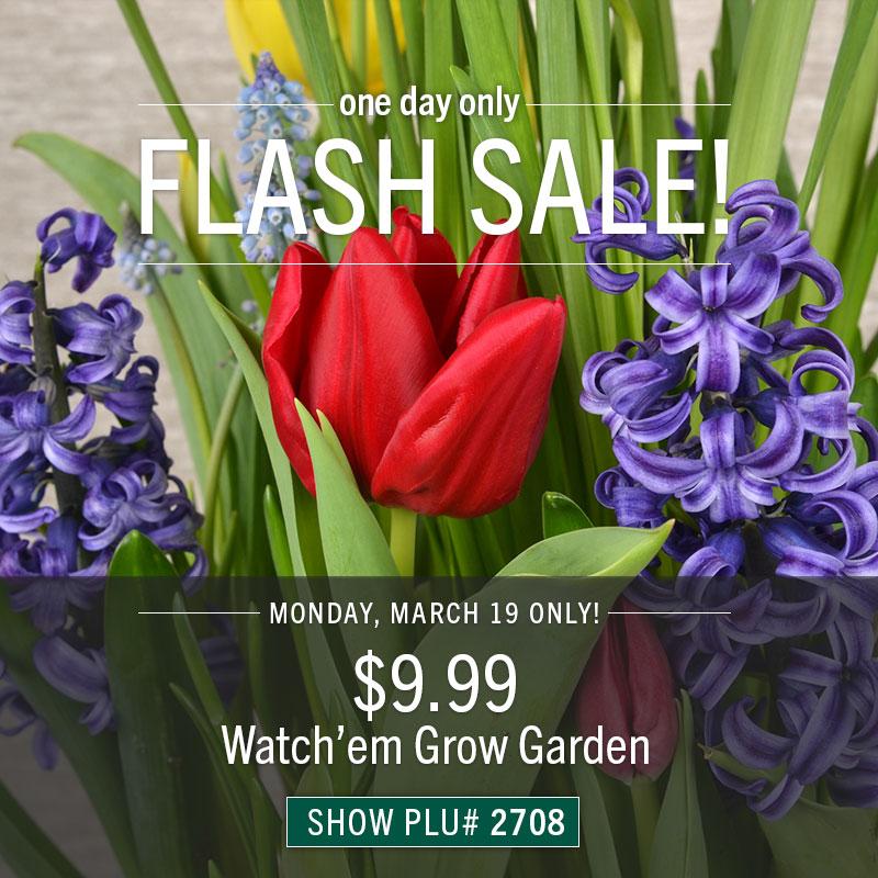 Monday Only: $9.99 Watch'em Grow Bulb Garden