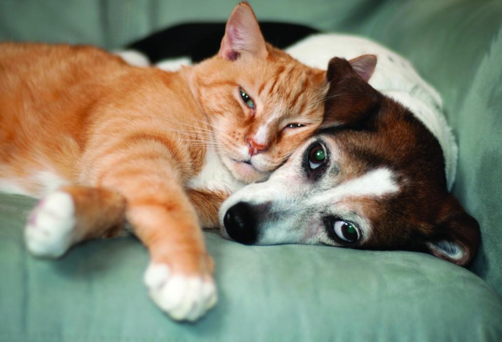 DogCatFriendsSm