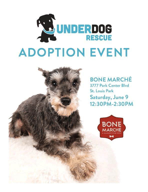 Bone-Marche-Under-Dog-Recue-6-9-18
